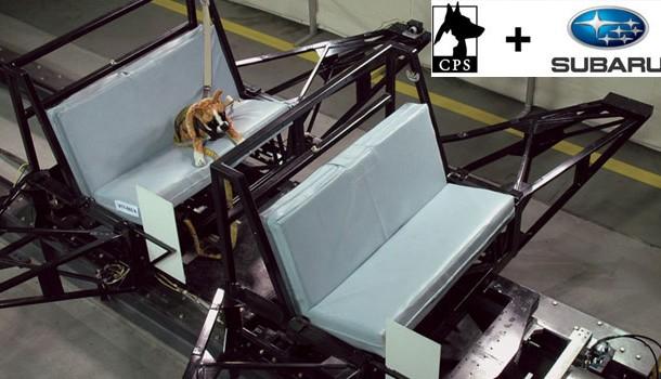 Subaru y Center for Pet Safety juntos para la seguridad de tu mascota