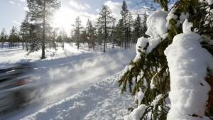 5210_snow-tree-road-sweden-205_666_896x504