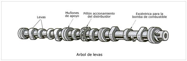 arbol-levas