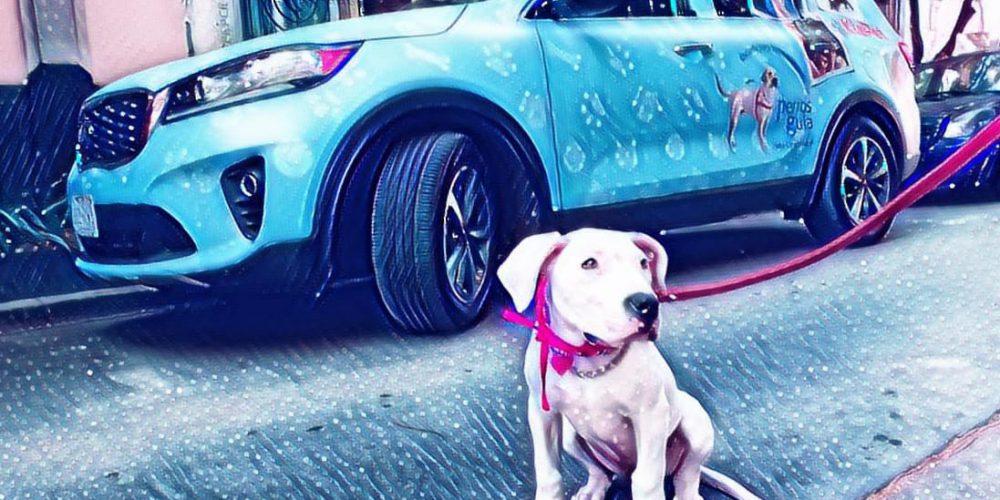 KIA Pet te dice cómo debe viajar tu mascota en el auto