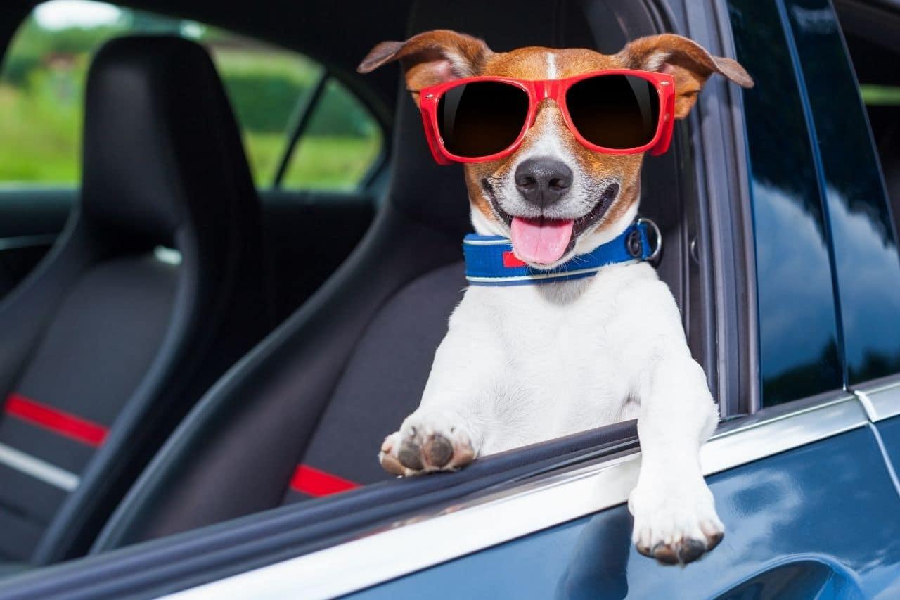 En el Día Mundial del perro, 10 reglas básicas para viajar en auto con él