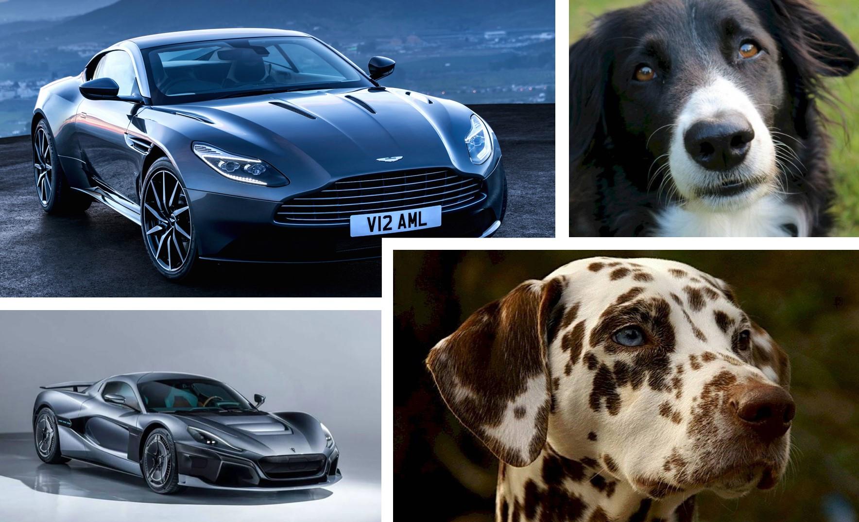 Si los perros fueran autos, ¿qué marca serían?