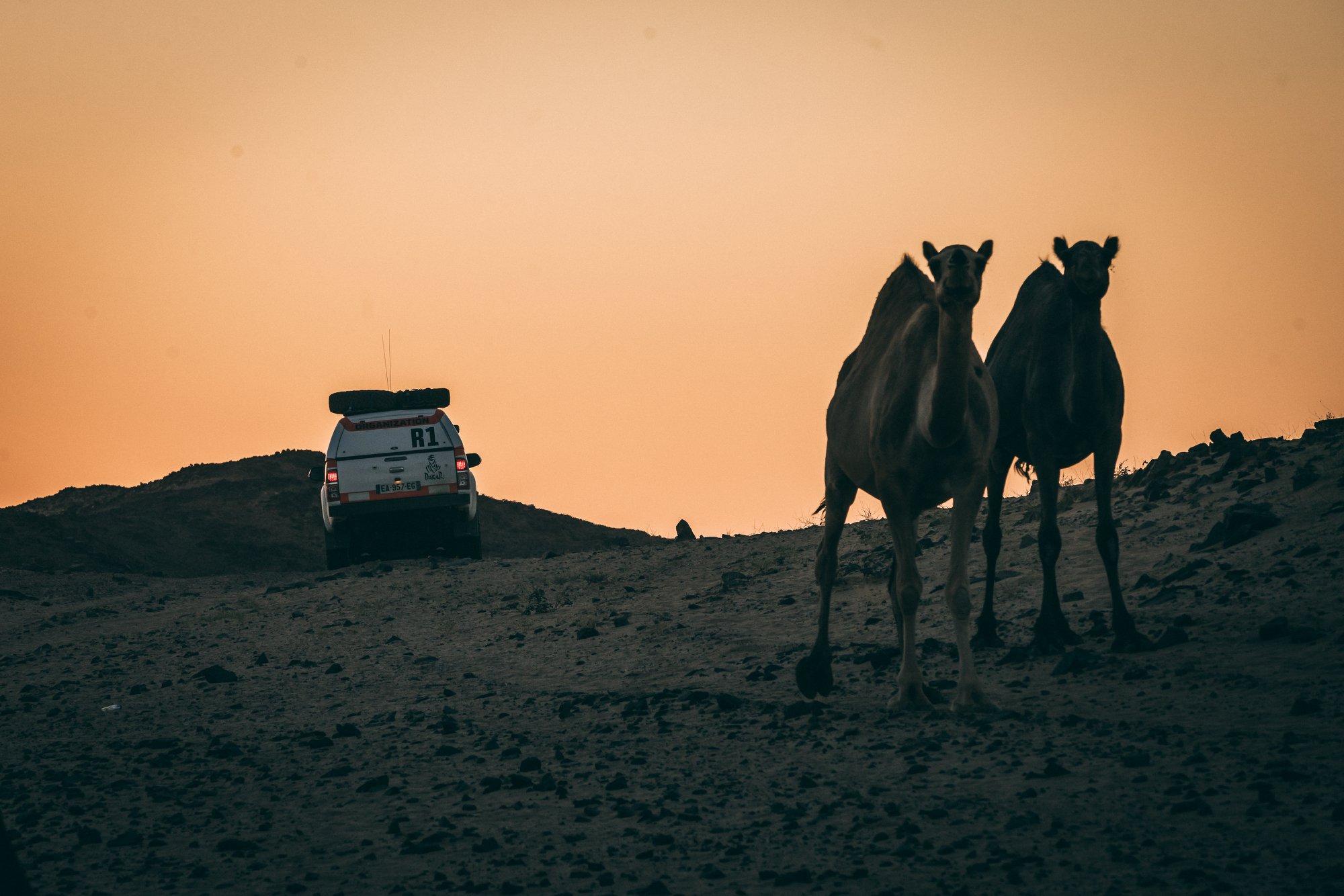 Rally Dakar en peligro: Arabia Saudí cierra la frontera